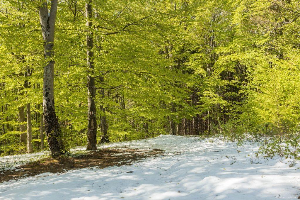 6 - Seasons of Cozia