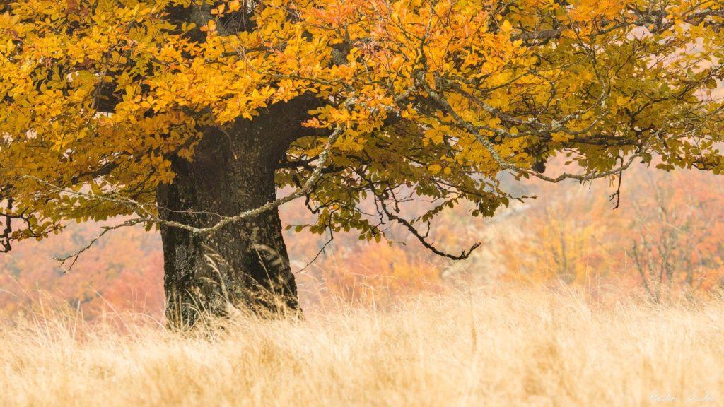 59 - Spectacular Autumn in Bodoc