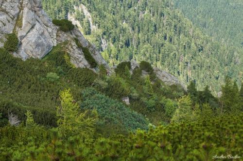 55 1 500x99999 - Bucegi: Hoinari pe brâuri, în Morar