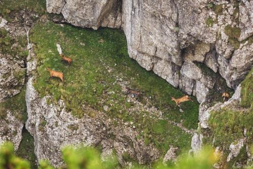 22 1 500x99999 - Bucegi: Ace și brâuri în Morar