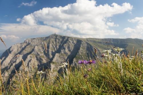 73 500x99999 - Bucegi: Ace și brâuri în Morar
