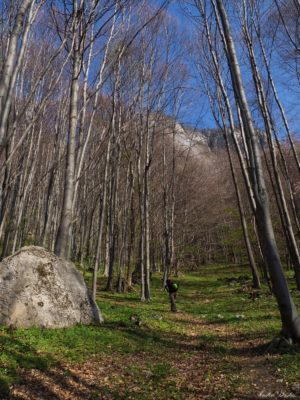 8 300x400 - Verticale în Postăvaru: Muchia Panseluței și Muchia Căprioarei