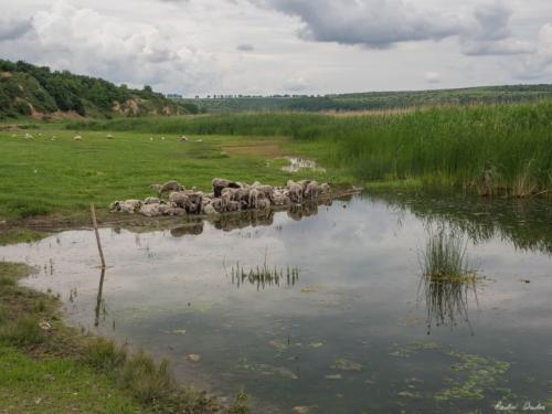 25 500x99999 - Istorie și maci în Dobrogea, spre Adamclisi