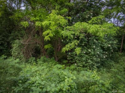 3 400x300 - Istorie și maci în Dobrogea, spre Adamclisi