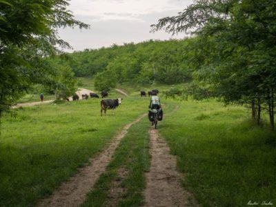 47 400x300 - Istorie și maci în Dobrogea, spre Adamclisi