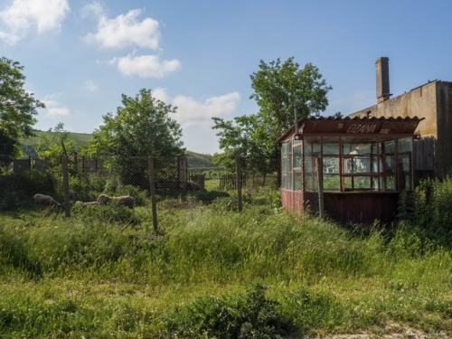 56 500x99999 - Istorie și maci în Dobrogea, spre Adamclisi