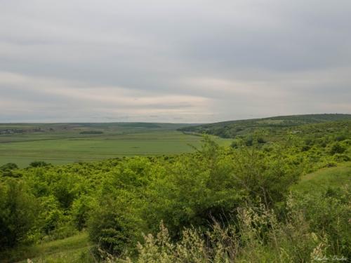8 500x99999 - Istorie și maci în Dobrogea, spre Adamclisi