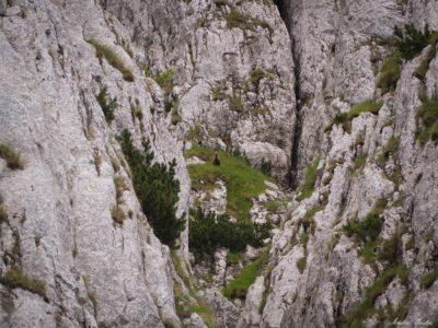 24 400x300 - Brâul de Mijloc nordic, Piatra Craiului