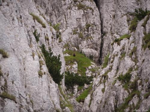 24 500x99999 - Brâul de Mijloc nordic, Piatra Craiului