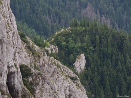 42 500x99999 - Brâul de Mijloc nordic, Piatra Craiului