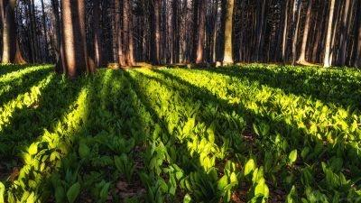 În căutarea primăverii în Munții Tătarului
